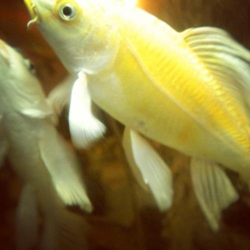 poisson-prosperite-pho-tai