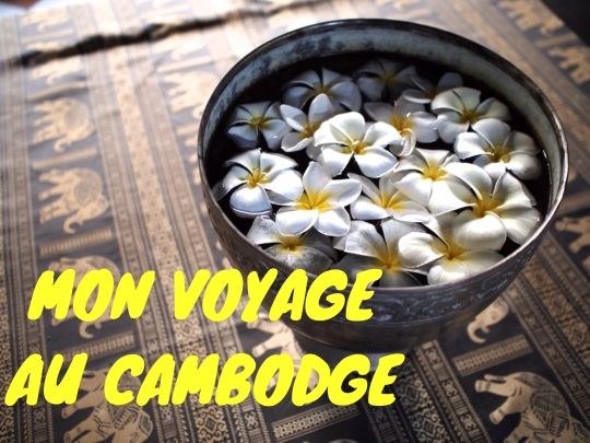 Voyage-Cambodge-fleurs-frangipanier